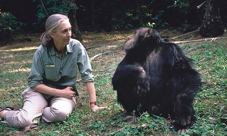Jane-And-Gorilla.jpg