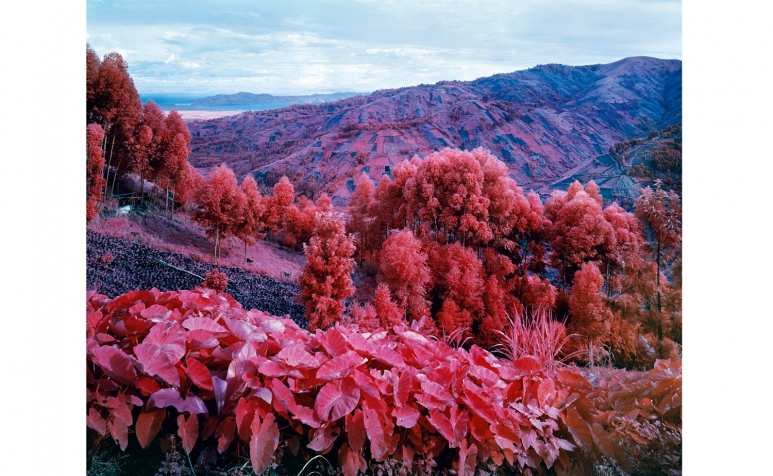 carlier gebauer_Richard Mosse_2015_I Shall Be Released.jpg